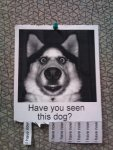 Have You Seen This Dog.jpg