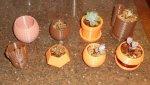 Planters-8.jpg