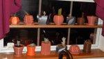 PlantersShelf1.jpg